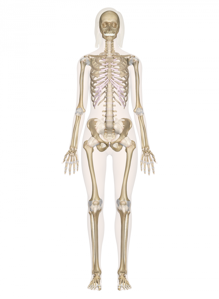the forensic analysis of the skeleton of an individual found in the bottom of a familys well in midd News at first offers authoritative insight on international and domestic news where we cover politics, finance, business, technology, science, sports and arts in today's fast passed media environment we strive to be the voice of online media news.